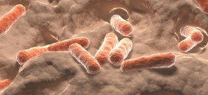 flore-intestinale-bactéries-darmflora-invloed-zoetstoffen