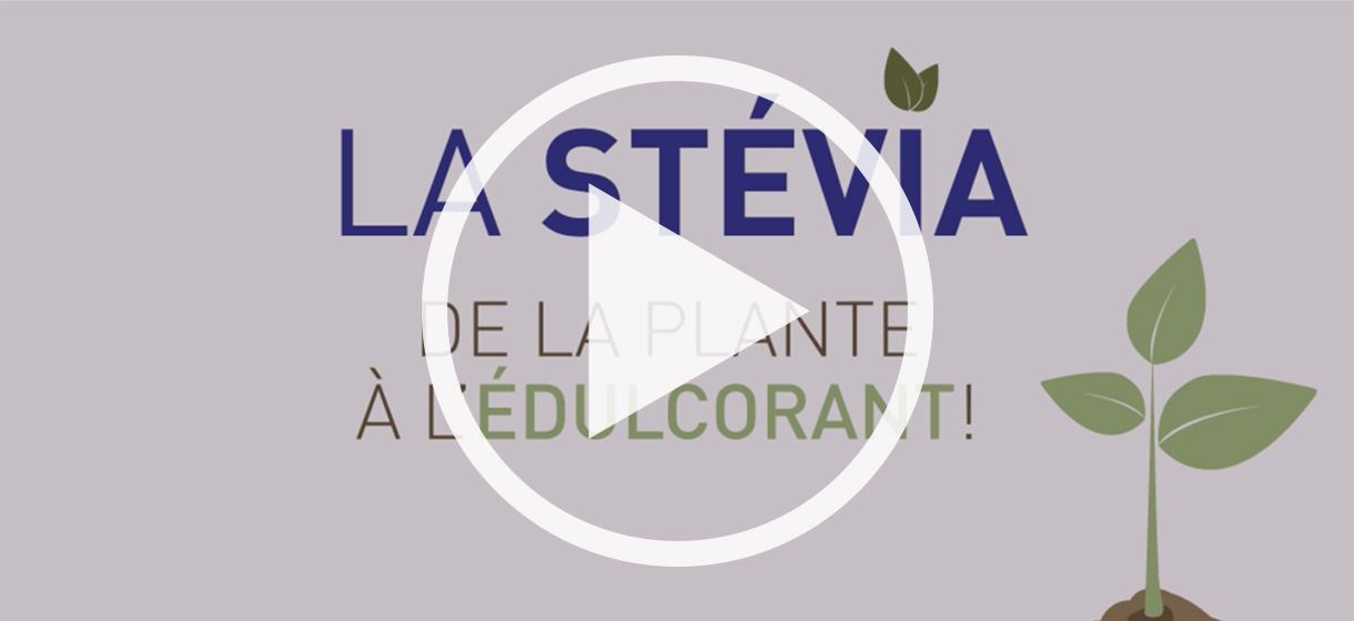 stevia-plante-edulcorant