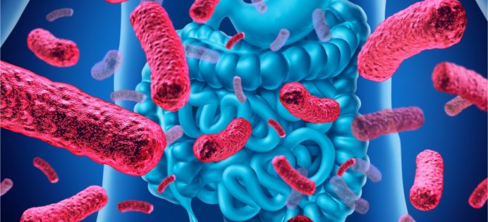edulcorants-nuisent-pas-microbiote-intestinal