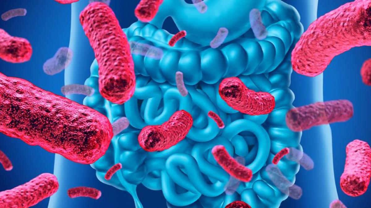 edulcorants-basses-calories-microbiote-intestinal